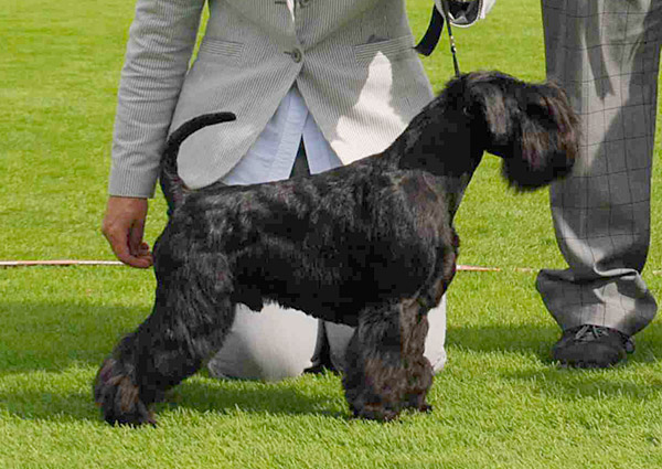 Best Veteran, 2.08.2015 (Sunday) - Winners of the International Dog Show Pori (Finland), 1 - 2 August 2015